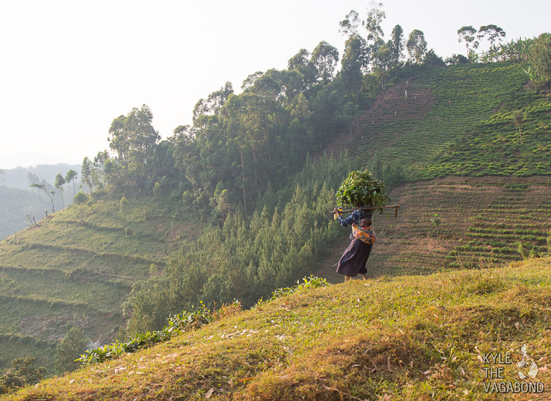 A tea farmer in Uganda
