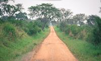 Thumbnail image for An Interminable Drive to an Impenetrable Forest: How Long is the Drive from Kampala to Bwindi Impenetrable Forest?